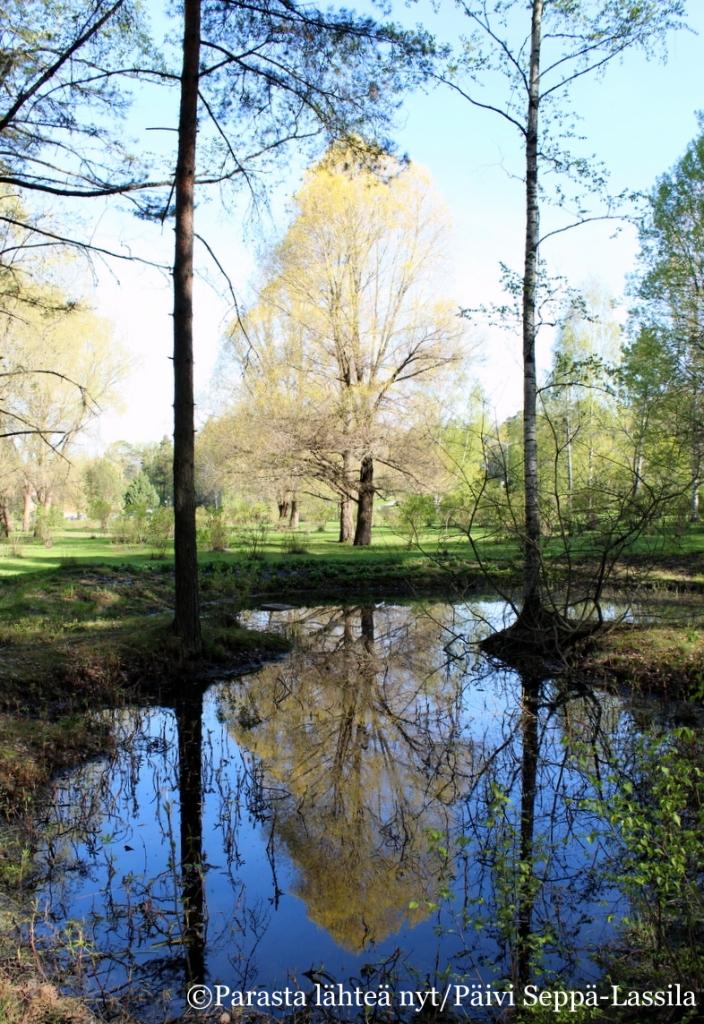 Tähkäpuiston lampi tarjoaa kasvuymäristön kosteassa viihtyville kasveille. Keväällä sen laitoja koristavat rentukat.