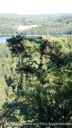 Nämä maisemat Aulangonjärvelle ovat inspiroineen Jean Sibeliusta säveltämään Finlandian.