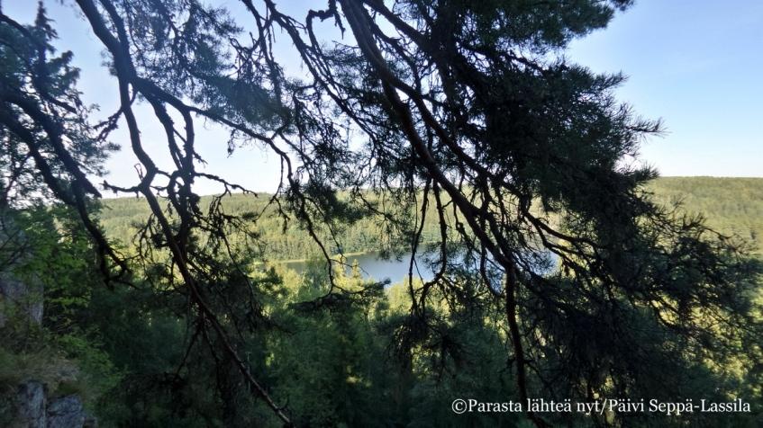 Aulangonjärven jylhää metsää.