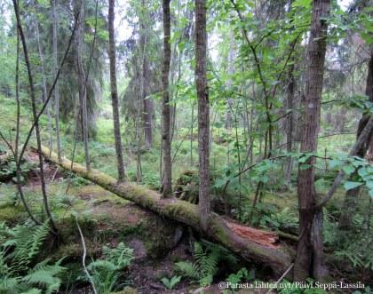 Kuuvasta löytyi puu, jonka oksat kasvavat ylöspäin.
