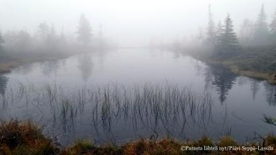 41. Sumuinen järvi Riisituntunturilla.