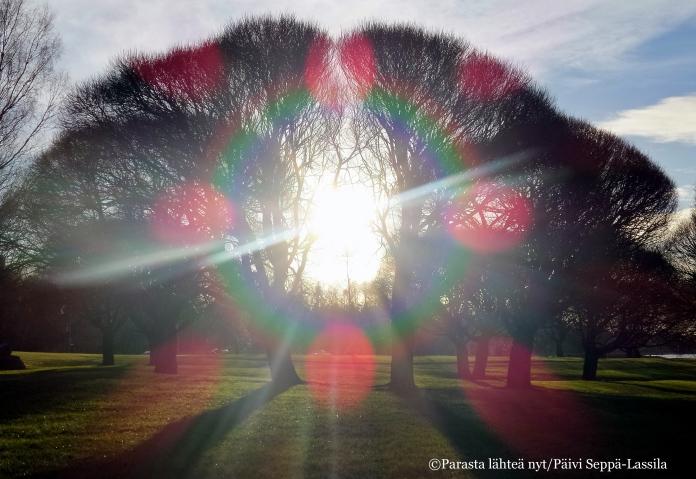 Rantapuiston puu vastavalossa - joulukuun aurinko valaisi ulkoiluhetkeäni.