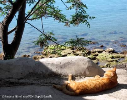 Kissanpäiviä kuumalla rantakivellä.