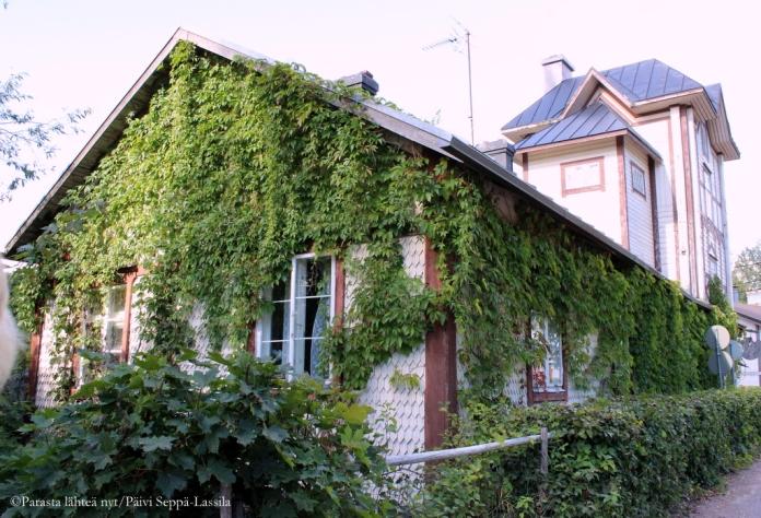 Villiviinin peittämän rakennuksen takana näkyy Vanha Viinatorni -rakennus.