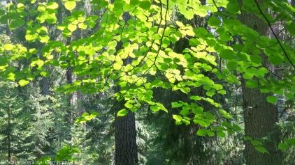 Metsän vihreyttä Aulangolla, Hämeenlinnassa.