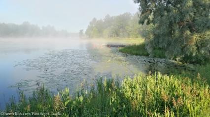 Aamusumuinen järvinäkymä Aulangolla, Hämeenlinnassa.