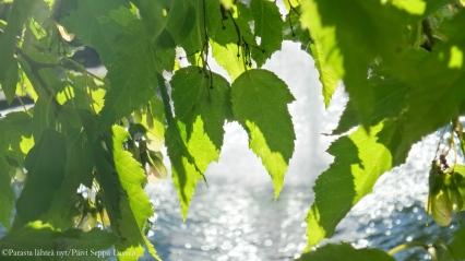Vihreyttä ja vettä Vanhalla hautausmaalla Turussa.