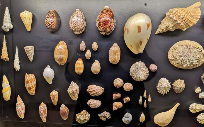 Kotiloita Luonnontieteellisessä museossa