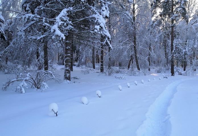 Luminen polku, kasvien nimikylttien päällä on paksu lumikerros