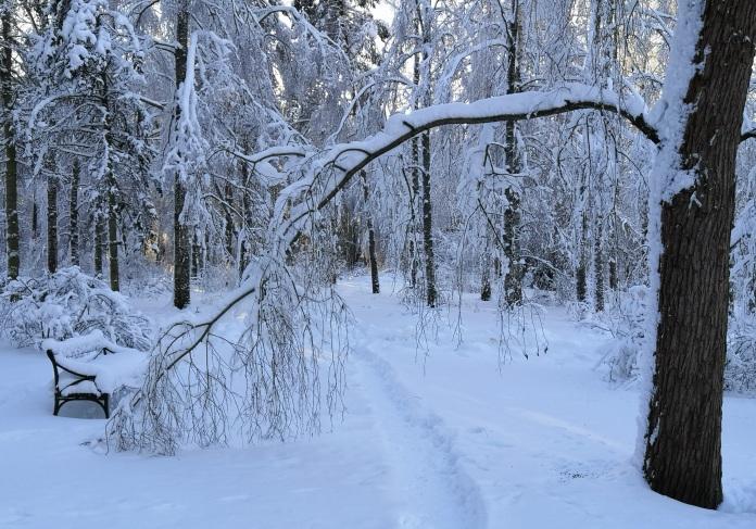 Lumeen tallattu polku lulkee taipuneen oksan alta